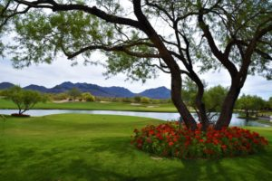 The Park At Grayhawk Homes